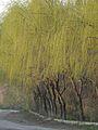 Spring - 3 (2009). (12903622933).jpg