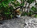 Squirrel near Boulder Beach 2.jpg