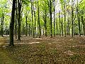 Stabroek, Belgium - panoramio (4).jpg