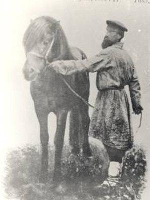 Vyatka horse - Vyatka stallion in 1902