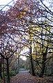 Stanley Marsh Nature Reserve - geograph.org.uk - 1052615.jpg