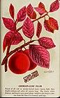 Stark fruits (1896) (19923862403).jpg