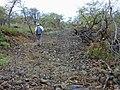 Starr-020422-0112-Bidens pilosa-habitat-Puu o Kali-Maui (23920318014).jpg