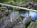 Starr-030729-0086-Hedychium coronarium-habitat-Hanawi stream-Maui (24011100013).jpg