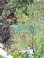 Starr 060422-7777 Casuarina equisetifolia.jpg
