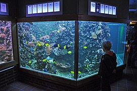 Stralsund, Meeresmuseum, Aquarium (2012-04-10) 5, by Klugschnacker in Wikipedia.jpg