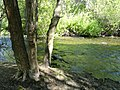 Stream - Garland Ranch Regional Park - Carmel Valley, CA - DSC06846.JPG
