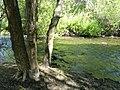 Stream - Garland Ranch Regional Park - Carmel Valley, CA - DSC06846.JPG