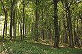 Strogi prirodni rezervat Veliki Sturac, planina Rudnik 01.jpg