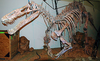 Suchomimus - Cast of the skeleton, Sternberg Museum of Natural History