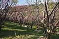 Sueyoshi Park Naha Okinawa Japan01s5.jpg