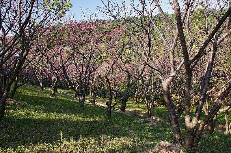 File:Sueyoshi Park Naha Okinawa Japan01s5.jpg