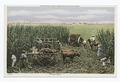 Sugar Cane, Milwaukee Public Museum Miniature Group, Milwaukee, Wisc (NYPL b12647398-74638).tiff