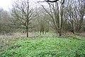 Sunninghill Woodland - geograph.org.uk - 762611.jpg