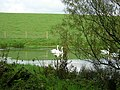 Swan Pond - geograph.org.uk - 263717.jpg