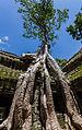Ta Phrom, Angkor, Camboya, 2013-08-16, DD 32.JPG