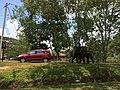 Taman Nasional Way Kambas Lampung Timur.jpg