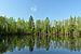 Tammiku järv.jpg