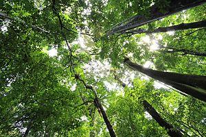 Tanjung Lesung - Tanjung Lesung Forest