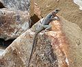Tanzania 128 - Flickr - gailhampshire.jpg