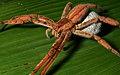 The Beautiful And Misunderstood Spiders (212516479).jpeg