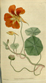 The Botanical Magazine, Plate 23 (Volume 1, 1787).png