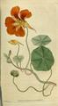 The Botanical Magazine, Plate 23 (Volume 1, 1787).png