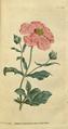 The Botanical Magazine, Plate 43 (Volume 2, 1788).png