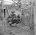 The British Army in Italy 1944 NA12639.jpg