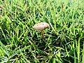 The Mushroom & The Grass.jpg