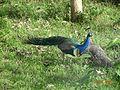 The National Bird.jpg