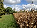 The Ohio State University (30026247905).jpg