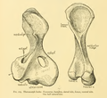 The Osteology of the Reptiles-176 oiuhg frty gty.png