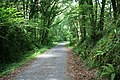 The Plym Valley Cycleway - geograph.org.uk - 883230.jpg