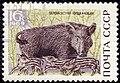 The Soviet Union 1969 CPA 3798 stamp (Wild Boar) cancelled.jpg
