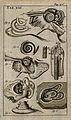 The anatomy of the ear. Engraving, 1686. Wellcome V0007782EC.jpg