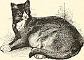 The cat, a guide to the classification and varieties of cats and a short tratise upon their care, diseases, and treatment (1895) (14577862088).jpg