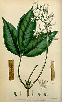 The flora homoeopathica (8260569689).jpg