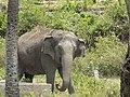 The giant elephant.jpg