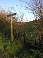 The path to Cow Dale - geograph.org.uk - 285385.jpg