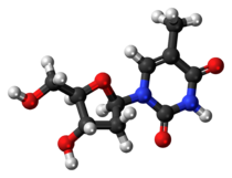 Ball-and-stick model of the thymidine molecule