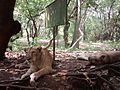 Tiger-Reservoir-Trivandrun2.jpg