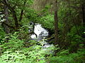 Tongass National Forest 2.jpg