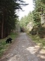 Track through the forestry - geograph.org.uk - 394047.jpg