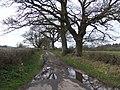 Track to Padwicks Farm - geograph.org.uk - 357368.jpg