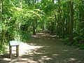 Trail in Nunnery Wood - geograph.org.uk - 839515.jpg
