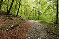 Trail in forest Slovenia.jpg