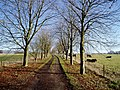 Tree-lined lane to Copsegrove Farm - geograph.org.uk - 294391.jpg