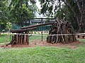 Tree art-1-cubbon park-bangalore-India.jpg