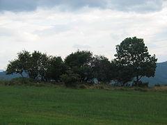 Trees-IMG 7033.JPG
